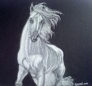 Cheval blanc. Alain Devred
