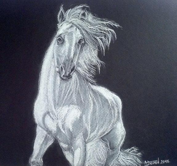 Cheval blanc. Alain Devred Alain Devred