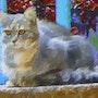Chat gris souris. Marie Carteron