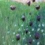 Wild flower field. Corneliart