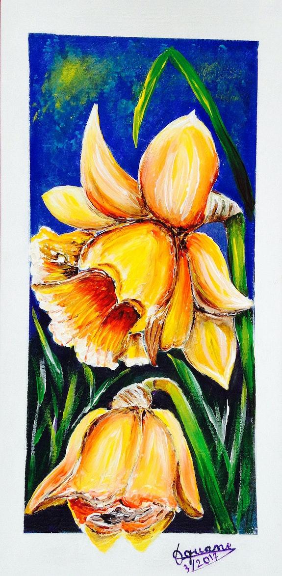Daffodyls. Aquan Aquan
