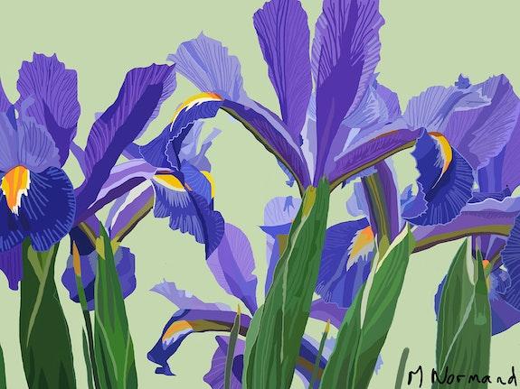 2015-07-21 Iris. Michel Normand Michel Normand