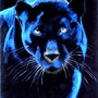 Panther. Malaver
