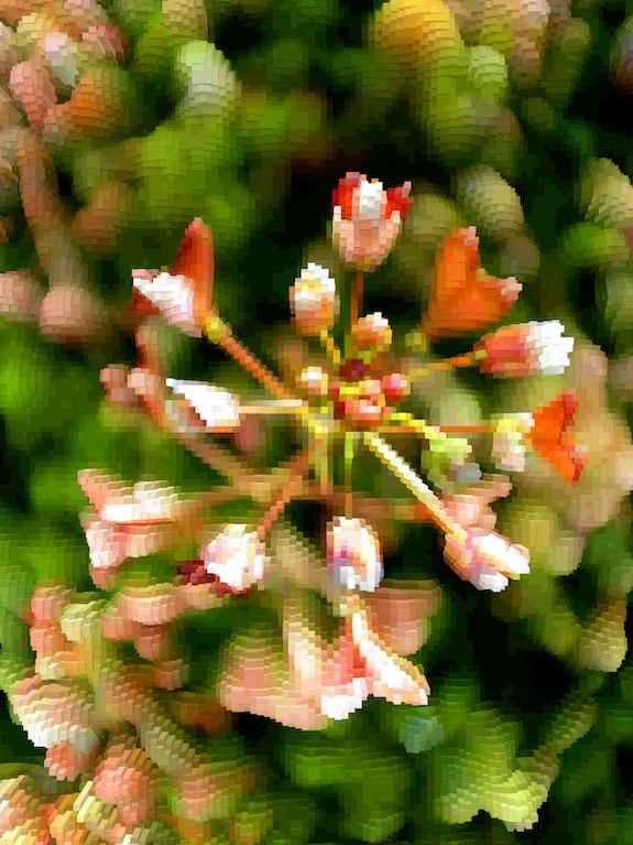 Floraison (2). Trans'pho Trans'pho