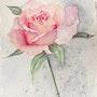 Rose rose. Valérie Domenjoz