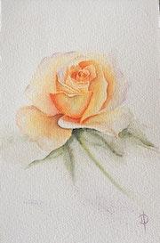 Rose jaune.