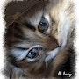 Les yeux du chat. Altarrié