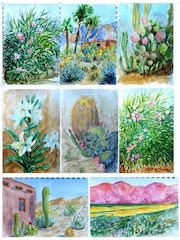Sketches of the desert in bloom - Borrego Springs, ca.