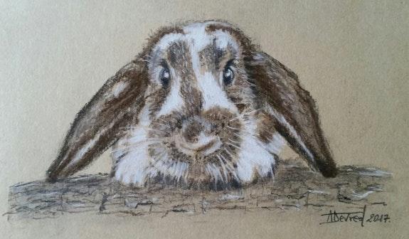 Le lapin bélier. Alain Devred Alain Devred