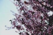 Flowers, spring 2017.