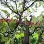 2016-03-29 Vieux chêne en hiver dans l'Esterel. Jpg. Michel Normand