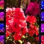 Colors… Colors… Colors…. Sophie Rac