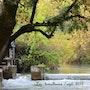 Lez «rivière». Martine Dugue