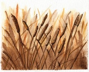 Cattails in Sepia (Watercolor Painting).