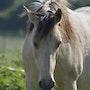 Un beau cheval dans la nature. Mite02