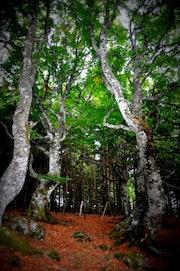 Les arbres.