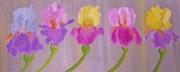 Iris (3).