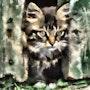 Un chat dans la gorge. Marie Carteron