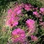 Torbillon de fleurs. Gipéhel