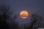 Lever de la lune champêtre.