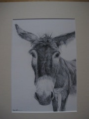 Guernsey Donkey. Diane Birch