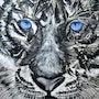 Schutz für den Sibirischen Tiger. Rainer Englisch