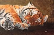 Jeune tigre de Sibérie.