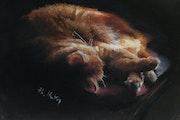 La sieste de Milou.