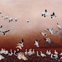 Snow Geese feeding in an abandoned cornfield. Mike Ross Original Oils