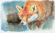 Watercolor Fox. Anna Frohling