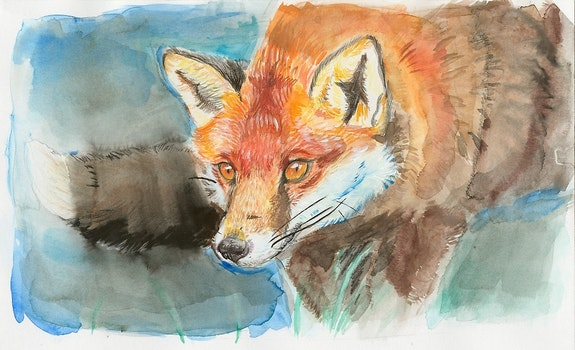 Watercolor Fox. Anna Frohling Anna Frohling