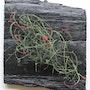 String Grass. Tomasz Grzesik