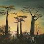 Allée des baobabs à Madagascar. Lachouette