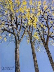 L'automne dans les hauts arbres de l'Avenue Van Horne à Montréal..