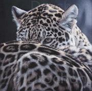 Jalousie (Jaguars). Christophe Drochon