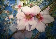 Acuarelas: Almendros en Flor. Marcial Aparicio