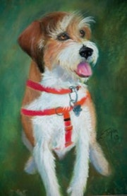 Jack Russell Terrier Pastel. Arts d'tryon Studio