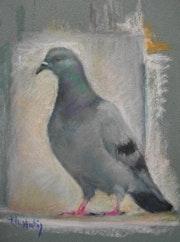 Copain Pigeon.