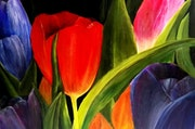 Les tulipes. Marie