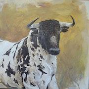 Estudio de toro de lidia.