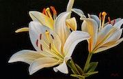 White Lillies. Dietrich Moravec
