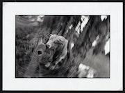Photographie argentique «Une vache dite folle». Catbalou