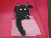 Calli la belle chatte noire.