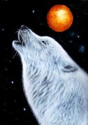 Loup blanc.