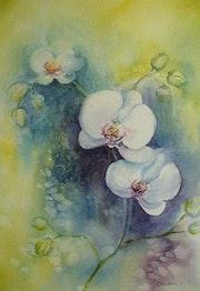 Orchidées.. Aqualine45