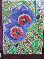 Geissorhiza radians fleurs pour illustrer livre sur randonnées.