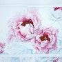 Pivoines arbustives (Paeonia delavayi). Jacqueline Hautbout