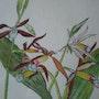 Orchidée 4. Brigitte Leleu