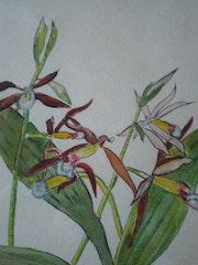 Orchidée 4.