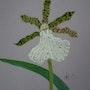 Orchidée 7. Brigitte Leleu